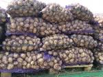 Картофель молодой оптом,  сорт Уладар