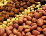 Продается картофель +5 от 10 тонн. Урожай 2017г.