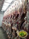 оптом мясо говядины халяль