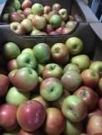 Яблоки  сортовые крымские калиброванные  от производителя оптом